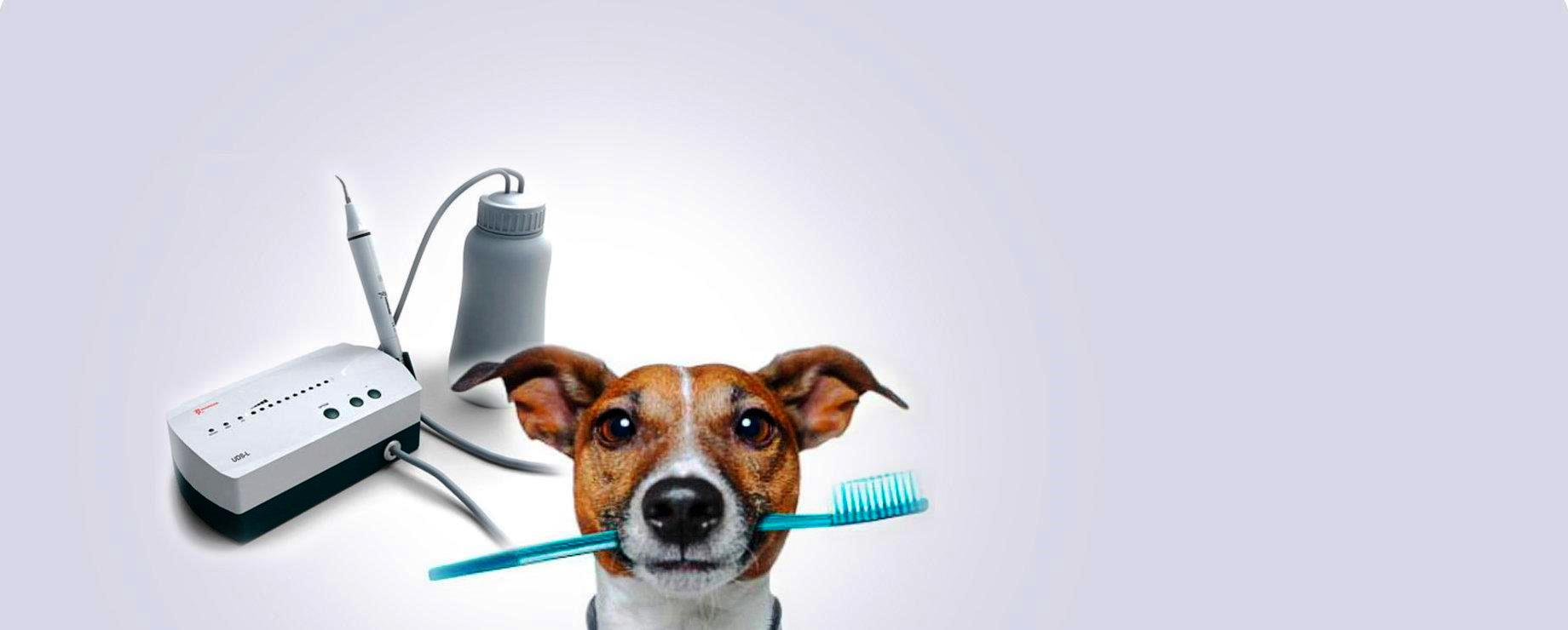 Чистка зубов собаке цена