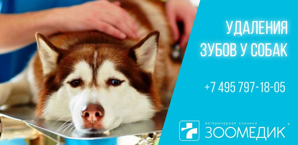 Удаления зубов у собак