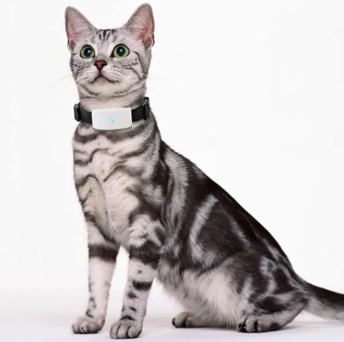 GPS-трекер для кошки